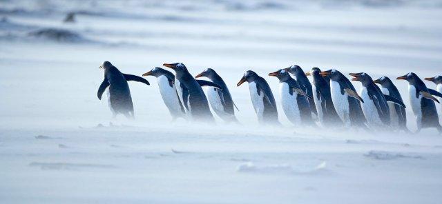 penguins-leader-1940x900_34162[1]